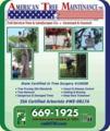 American Tree Maintenance